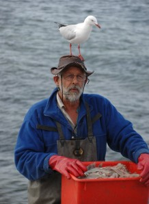 John Ayliffe prepares to feed the pelicans.