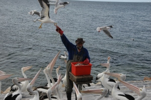 Feeding the gulls.
