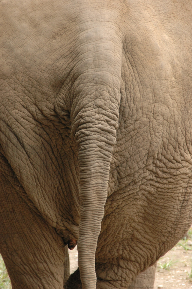 Even elephant behinds are beautiful