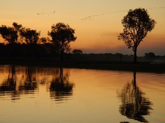 Magpie geese take to the air on a Yellow Water sunset cruise, Kakadu